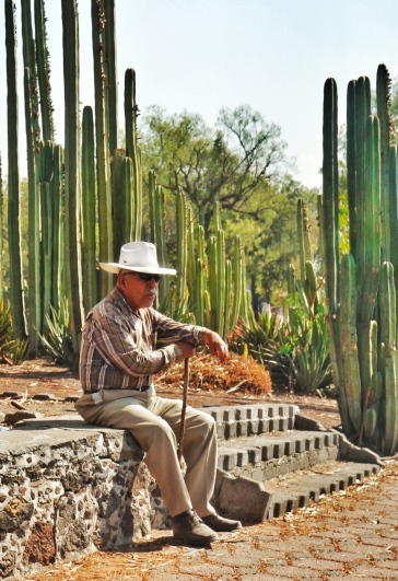 Mexico, Cactus, Old Man