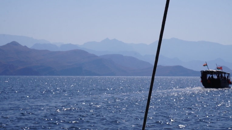 Dolphins, Dhow Cruise, Musandam, Oman