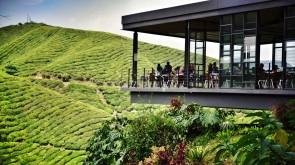 Cameron Highlands, Boh, Tea plantation, Malaysia