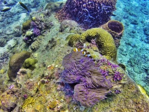 Underwater love, Diving, Nemo, Perhentians