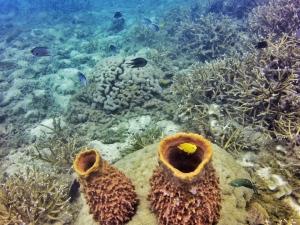 Underwater love, Diving, Perhentians