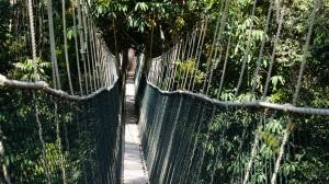 Canopy Walk Taman Negara